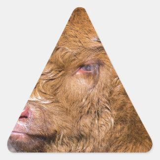 Portrait head newborn scottish highlander calf triangle sticker