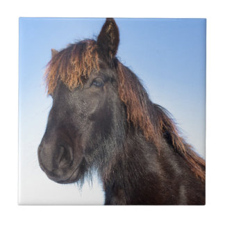 Portrait head of black Frisian horse Tiles