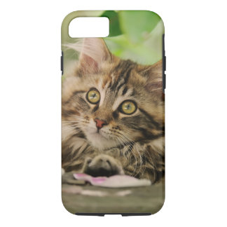 Portrait Maine Coon Cat Kitten, protective iPhone 7 Case