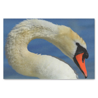 Portrait of a beautiful swan tissue paper