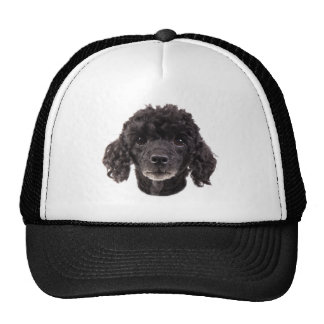 Portrait of a black poodle trucker hat
