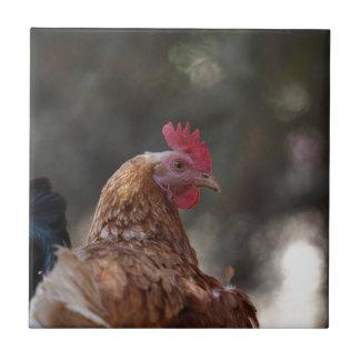 Portrait of a chicken on a farm. tiles