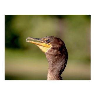 Portrait of a Cormorant Postcard