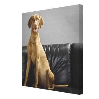 Portrait of a dog canvas print