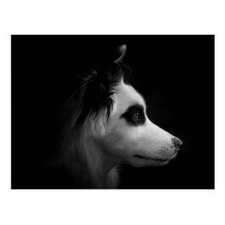 Portrait of a Dog in the Dark Postcard