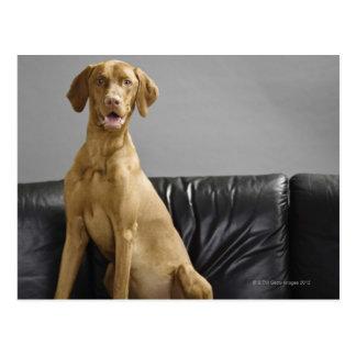 Portrait of a dog postcard