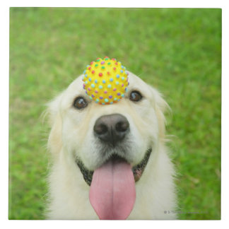 Portrait of a dog with a ball on its nose tile