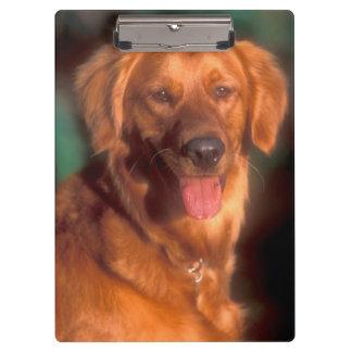Portrait of a golden retriever clipboard