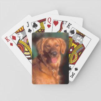 Portrait of a golden retriever poker deck
