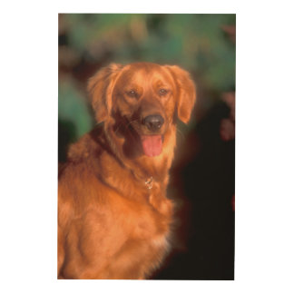 Portrait of a golden retriever wood prints