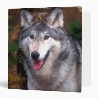 Portrait of a gray wolf binders