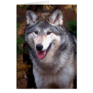Portrait of a gray wolf card