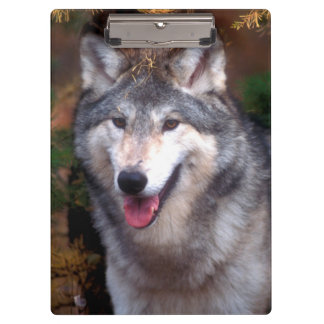 Portrait of a gray wolf clipboard