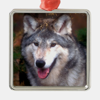 Portrait of a gray wolf metal ornament