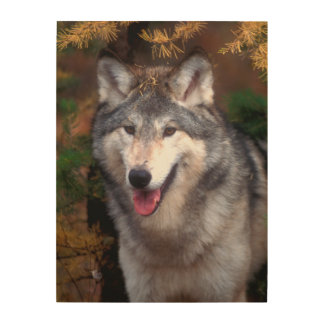 Portrait of a gray wolf wood print