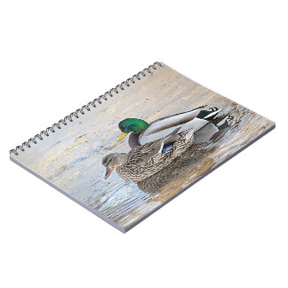 Portrait of a male and female mallard note books