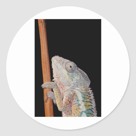 portrait of a male panther chameleon (furcifer par classic round sticker
