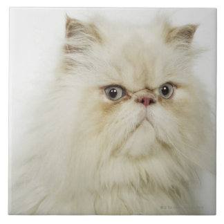 Portrait of a Persian cat Tile
