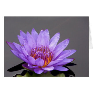 Portrait of a Purple Water Lily Card