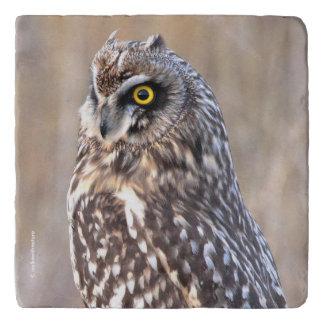 Portrait of a Short-Eared Owl Trivet