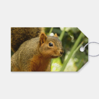 Portrait of a Squirrel Nature Animal Photography Pack Of Gift Tags