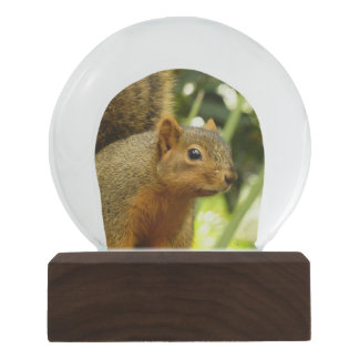 Portrait of a Squirrel Nature Animal Photography Snow Globe