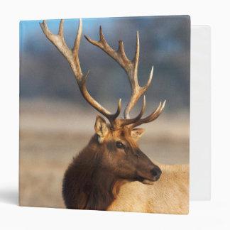 Portrait of a stunning bull elk 3 ring binders