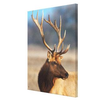Portrait of a stunning bull elk canvas print