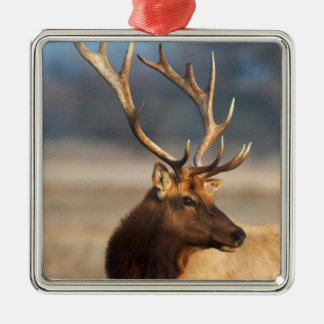Portrait of a stunning bull elk metal ornament