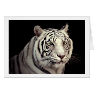 Portrait of a White Bengal Tiger Greeting Cards