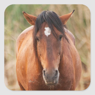 Portrait of a Wild Mustang Square Sticker