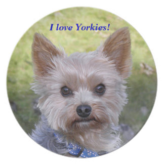 Portrait of a Yorkshire Terrier Dinner Plates