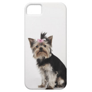 Portrait of a Yorkshire Terrier dog iPhone 5 Cover
