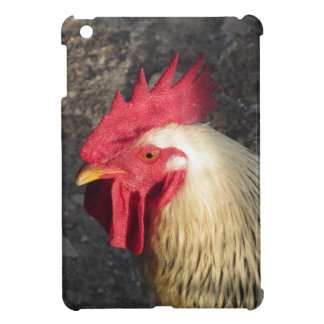 Portrait of an adult rooster on the poultry yard cover for the iPad mini