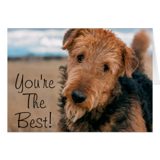 Portrait of an Airedale Terrier 2 Card