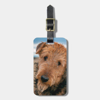 Portrait of an Airedale Terrier 2 Luggage Tag