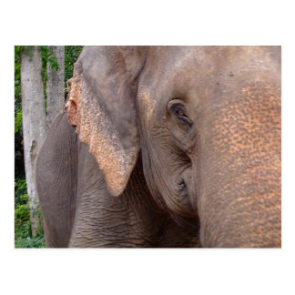 Portrait of an elephant postcard