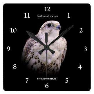 Portrait of an Inquisitive Saker Falcon Wallclock