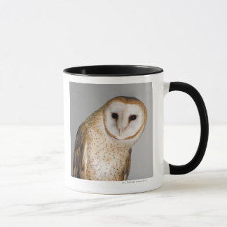 Portrait of barn owl (Tyto alba). Mug