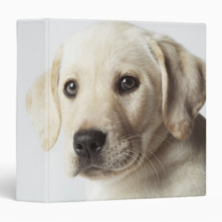 Portrait of blond Labrador Retriever Puppy 3 Ring Binders