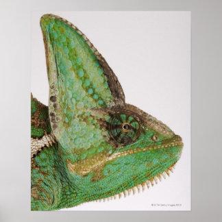 Portrait of boldly colored Yemen chameleon Poster