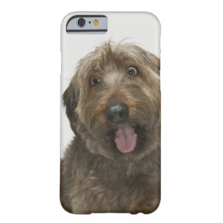 Portrait of Briard dog Barely There iPhone 6 Case