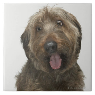 Portrait of Briard dog Tile