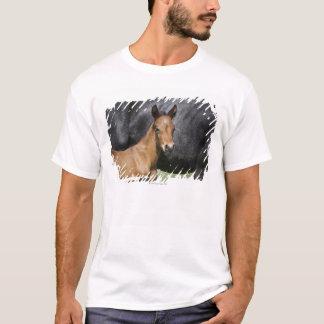 portrait of brown foal T-Shirt