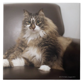 Portrait Of Cat Sitting In Chair Tile