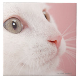 Portrait of cat tile