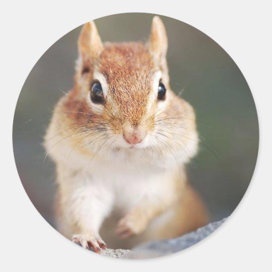 portrait of chipmunk with full cheeks classic round sticker