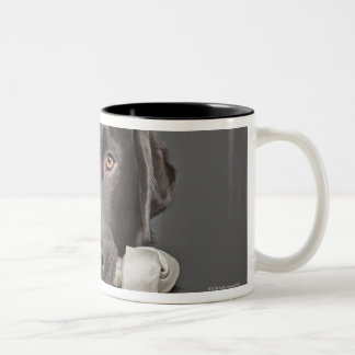 Portrait of chocolate labrador mugs