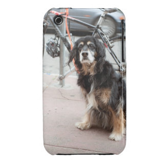 Portrait of dog waiting expectantly for owner; iPhone 3 Case-Mate cases