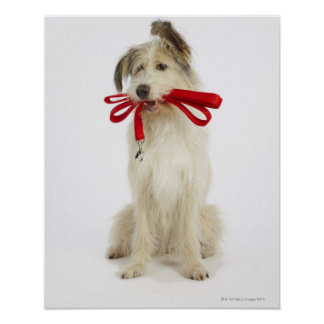 Portrait of Dog with Leash Poster
